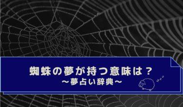夢占い|色・大きさ・蜘蛛の種類は?蜘蛛の巣・蜘蛛の夢の意味まとめ